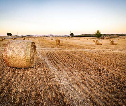 hay bales in field agricultural law specialists