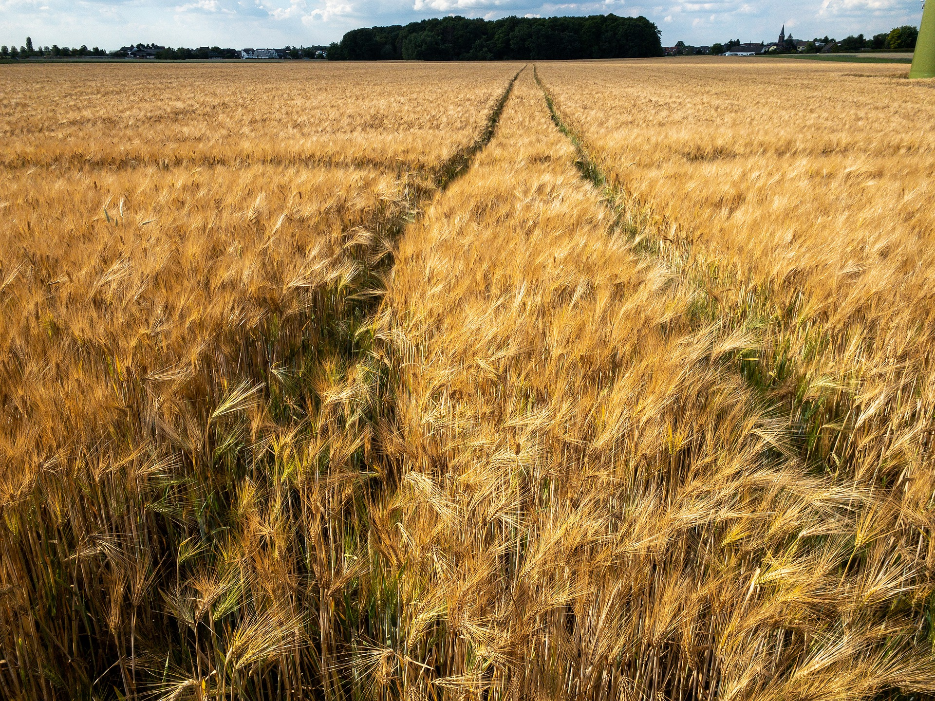 agricultural grain field